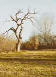 Lonely bare tree on the field in winter Stock Photos