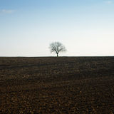 Lonely bare tree Stock Images