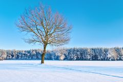 Lonely bare tree in a snowy meadow near forest. Royalty Free Stock Photos