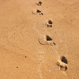 Lonely Beach Footsteps Royalty Free Stock Image