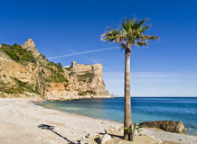 Lonely Beach with a Palm Tree. Beautiful Mediterranean cove located in the Costa Blanca of Spain, with a palm tree on the foreground Stock Photography