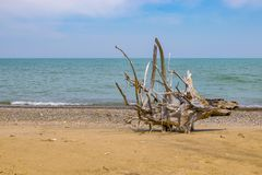 Lonely Beach. Shot of a piece of a dried out tree on a beach Royalty Free Stock Image