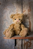 Lonely bear Royalty Free Stock Images