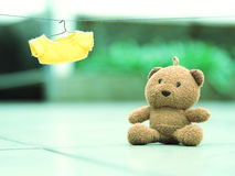 Lonely bear. Single diary of lonely bear Royalty Free Stock Images