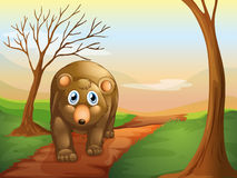 The lonely bear walking Royalty Free Stock Images