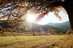 Lonely Beautiful Autumn Tree Royalty Free Stock Photography