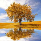Lonely beautiful autumn tree Stock Images