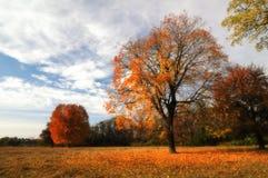 Lonely beautiful autumn tree Stock Image