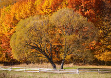 Lonely beautiful autumn tree. Stock Image