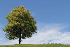 Lonely Beautiful Tree on Hill Top Royalty Free Stock Photography