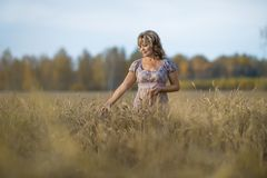 Mature woman in wheat field. Lonely beauty mature woman, walks on the wheat field, horizontal photo Stock Photography