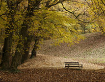 Lonely Bench Royalty Free Stock Photos