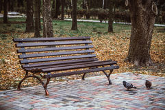 Lonely bench in autumn Park Stock Photo