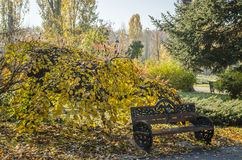 Lonely bench in an autumnal scenery. In Herastrau Park, Bucharest, Romania Stock Images