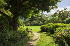Lonely bench in a botanic Garden. Road Town, Tortola Royalty Free Stock Photography