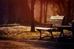 Lonely Bench in the Evening Park Stock Image