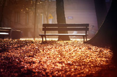 Lonely Bench in the Evening Park Royalty Free Stock Photo