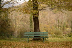 The lonely bench Stock Photography