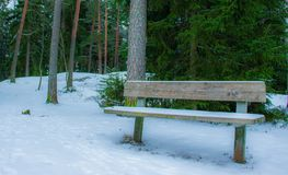 A lonely bench in the forest stock photos