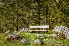 Lonely bench in forest Royalty Free Stock Photo