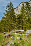 Lonely bench in forest Stock Photo