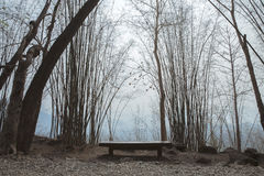 Lonely bench in a forest Stock Photo