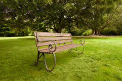 Lonely wooden bench on a green lawn Stock Image