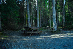 Lonely Bench. Image is shot with a Nikon D3400 18-55mm lens. This image captivates the lonely bench found surrounded by many trees. it gives a scary vibe but at Royalty Free Stock Photography