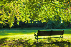 Lonely bench on the lawn Royalty Free Stock Images