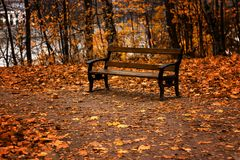 Lonely bench in the middle of the park among the bright yellow autumn leaves Royalty Free Stock Photography