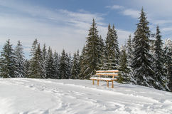 A lonely bench near the forest Stock Images