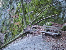 Lonely Bench. Next to a fallen tree in the forest royalty free stock images