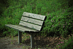 Lonely bench. Old lonely bench in the evening forest Stock Photo