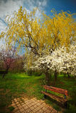Lonely bench in park during springtime Royalty Free Stock Photography