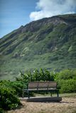 Lonely bench on a sunny beach in hawaii stock photos
