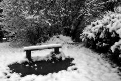 Lonely bench in winter garden Royalty Free Stock Photography