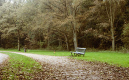 Lonely bench. In the woods, with dried leaves on the ground during autumn Stock Image