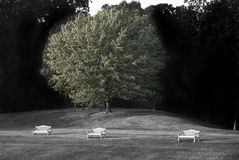 Lonely Benches. Three lonely benches by the trees stock photos