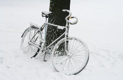 Lonely bicycle covered by snow. Lonely bicycle covered by snow near tree Royalty Free Stock Image