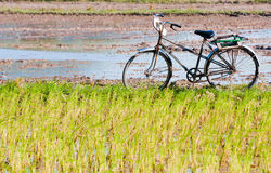 Lonely bike waiting Stock Images