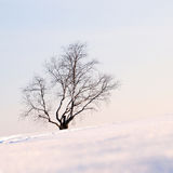 Lonely birch Royalty Free Stock Photos