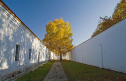 Lonely birch in the prison yard. Royalty Free Stock Images