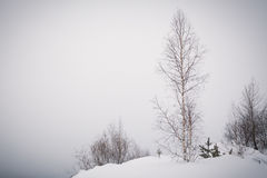 Lonely birch Stock Photo