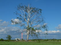 Lonely birch tree with industrial background. Stock Photos