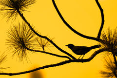 Silhouette of bird against orange sky Stock Image