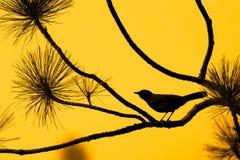 Silhouette of bird against orange sky stock image