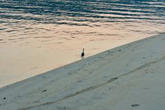 Lonely bird in a beach in sunrise royalty free stock photo