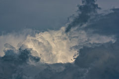 Lonely bird in the clouds Stock Images