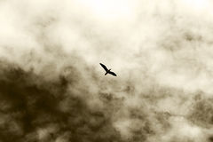 A lonely bird flying, against a cloudy sky Stock Photo