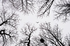 Lonely bird flying among winter trees Stock Images